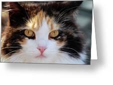 Golden Eyes Greeting Card