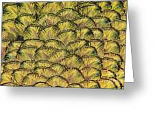 Golden Feathers Greeting Card