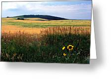 Golden Fields Forever Greeting Card by Kathy Yates