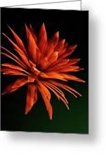 Golden Fireworks Flower Greeting Card