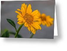 Golden Flower II Greeting Card