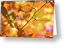 Golden Foliage Greeting Card