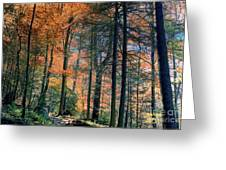 Golden Forest Path Greeting Card