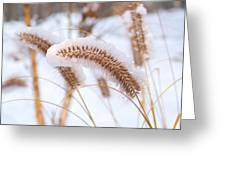 Golden Foxtail Greeting Card