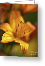 Golden Gazer Greeting Card