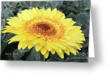 Golden Gerbera Daisy Greeting Card
