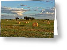 Golden Glow Over Haybales Greeting Card