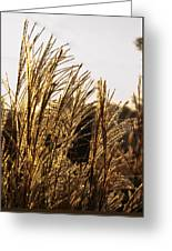 Golden Grass Flowers Greeting Card