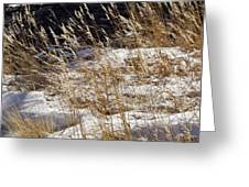 Golden Grasses In Sun And Snow Greeting Card