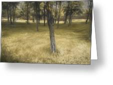 Golden Grove Greeting Card