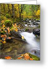Golden Grove Greeting Card by Mike  Dawson