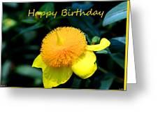 Golden Guinea Happy Birthday Greeting Card