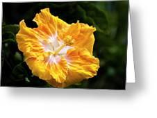 Golden Hibiscus - Hawaii Greeting Card