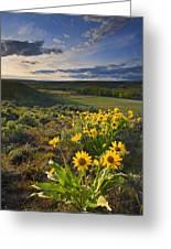 Golden Hills Greeting Card
