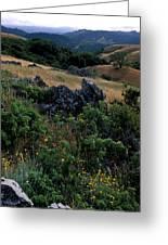 Golden Hills Of Summer Greeting Card