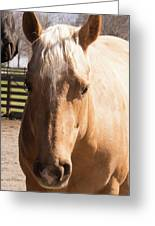 Golden Horse Greeting Card