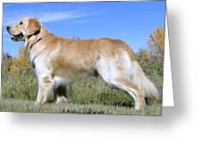 Golden Labrador - Cheemo Greeting Card