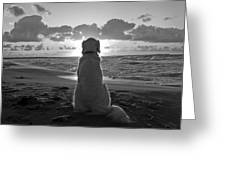 Golden Labrador Watching Sunset Greeting Card