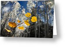 Golden Leaves Against A Muted Forest Greeting Card