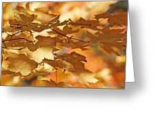 Golden Light Autumn Maple Leaves Greeting Card