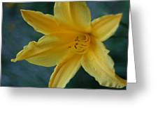 Golden Lily 2 Greeting Card