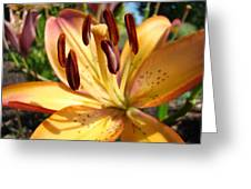 Golden Lily Flower Orange Brown Lilies Art Prints Baslee Troutman Greeting Card