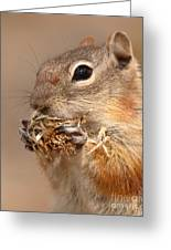 Golden-mantled Ground Squirrel Nibbling On A Bite Greeting Card