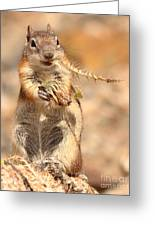 Golden-mantled Ground Squirrel With A Prickly Bite Greeting Card