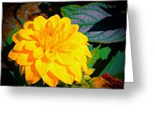 Golden Moment In The Morning Greeting Card