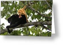 Golden Monkey Greeting Card