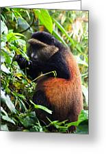 Golden Monkey II Greeting Card