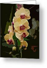 Golden Moth Orchid Greeting Card