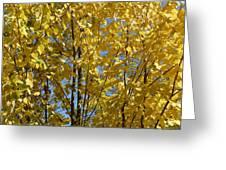 Golden October Greeting Card