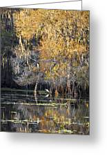 Golden On The River Greeting Card