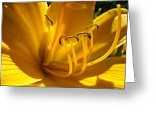 Golden Orange Lily Art Print Lilies Flowers Baslee Troutman Greeting Card
