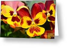 Golden Pansies Greeting Card