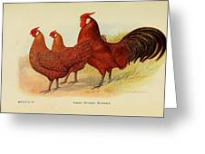 Golden Penciled Hamburgs Greeting Card