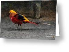 Golden Pheasant Greeting Card