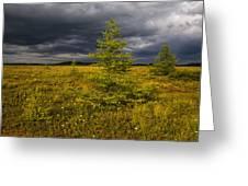 Golden Plains Greeting Card