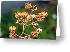 Golden Pods Greeting Card