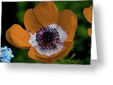 Golden Poppy Greeting Card