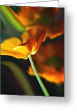 Golden Possibilities... Greeting Card