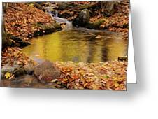 Golden Reflections In A Stream On The Blanchet Trail Gatineau Pa Greeting Card