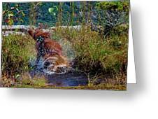 Golden Retreiver Shakes It Off Greeting Card