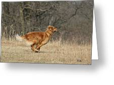 Golden Retriever 2 Greeting Card