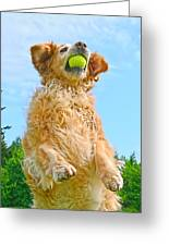 Golden Retriever Catch The Ball  Greeting Card