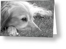 Golden Retriever Dog In The Cool Grass Monochrome Greeting Card
