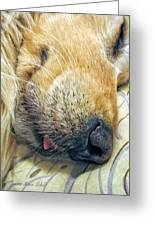Golden Retriever Dog Little Tongue Greeting Card by Jennie Marie Schell