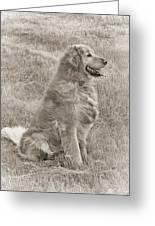 Golden Retriever Dog Sepia Greeting Card by Jennie Marie Schell