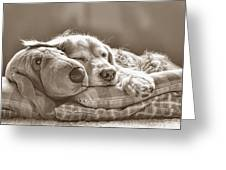 Golden Retriever Dog Sleeping With My Friend Sepia Greeting Card